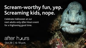 After Hours at the Vancouver Aquarium – Adults Only
