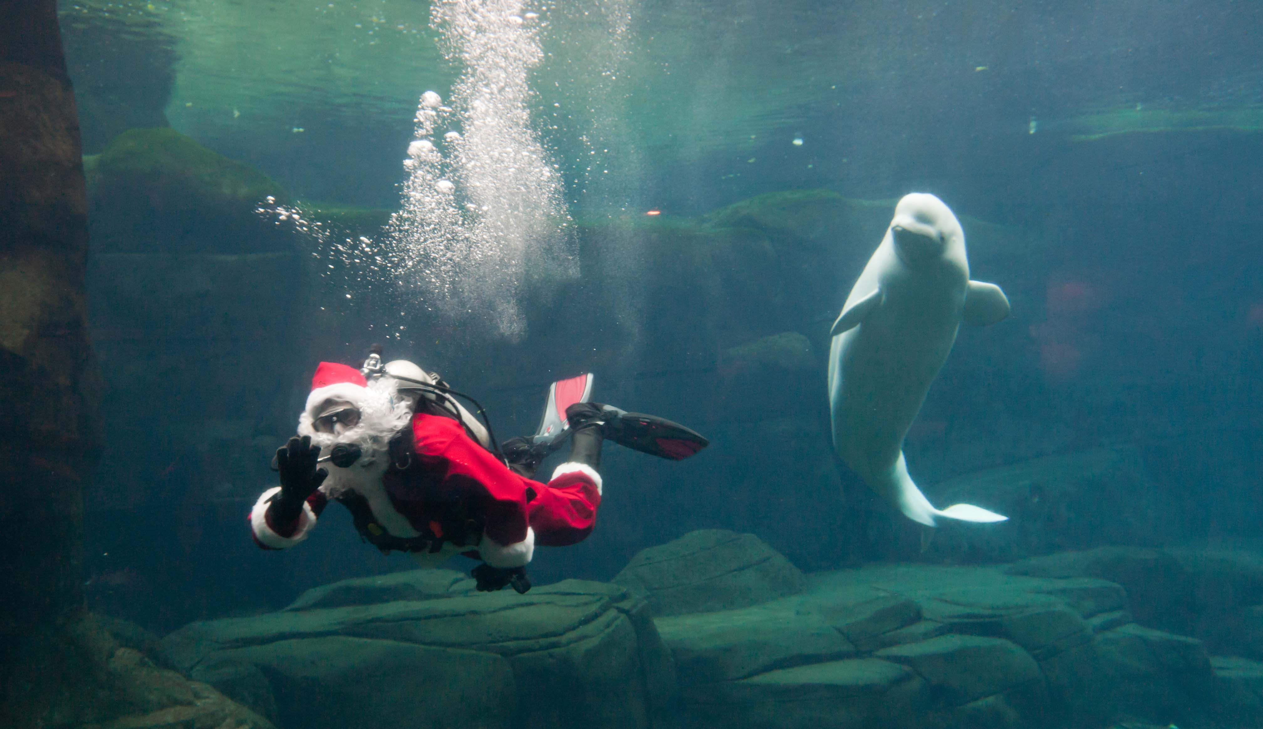 Holidays at Vancouver Aquarium with Scuba Claus