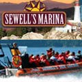 Sewell's Marina, Tours and Boat Rentals